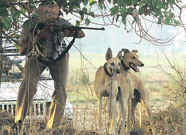 Hounds, Hares And Punjab's Neo-Nawabs