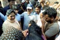 BJP Govts in MP, Other States Oppressing Farmers, Poor, Says Mayawati