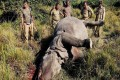 Animals Dying In Accidents In Kaziranga, What Are Your Traffic Sensors Doing?: NGT Pulls Up Assam Govt