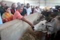 RTI Reveals Aparna Yadav's NGO Given 86 Percent Of SP's Cow Welfare Grant